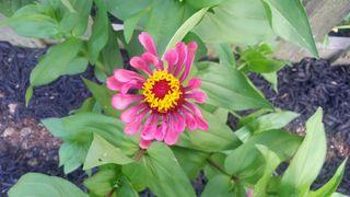 2015 Summer Garden 6