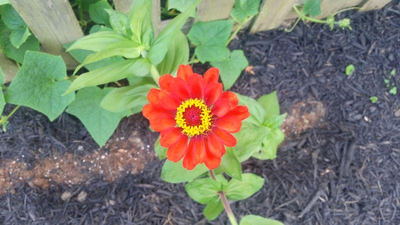 2015 Summer Garden 5